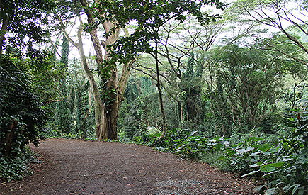 Explore Manoa Falls Trail